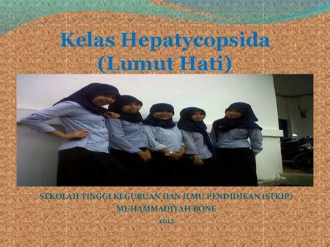 Lumut H lumut hati hepaticopsida