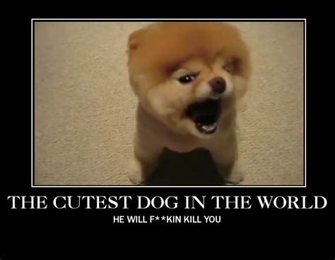 what is the cutest puppy in the world the cutest in the world by apencilsmind on deviantart