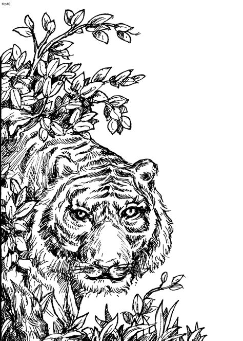 coloring pages of detailed animals detailed animal coloring pages bestofcoloring com
