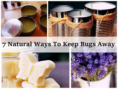 ways to keep bugs away from your garden