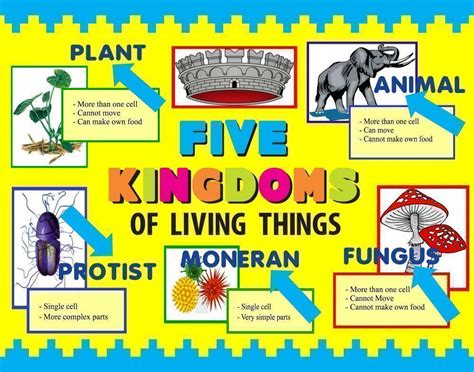 the between kingdoms books make a science fair project poster ideas five kingdoms