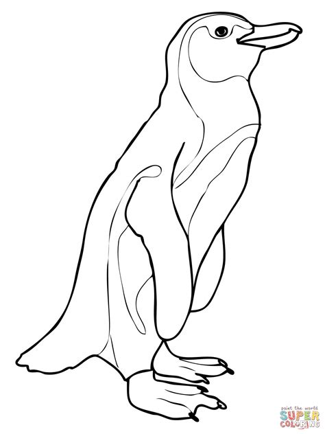 galapagos penguin coloring page ausmalbild brillenpinguin ausmalbilder kostenlos zum