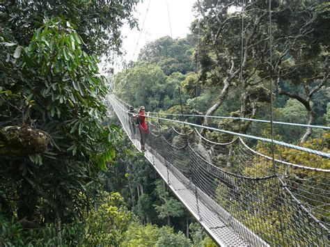 nyungwe forest gorillatimes in awe of nyungwe forest development safari