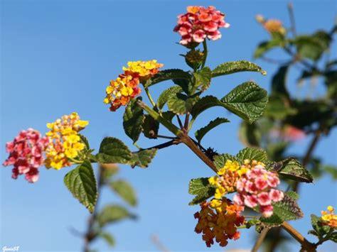 imagenes flores silvestres sus nombres flores silvestres fotos de paisajes naturales y urbanos
