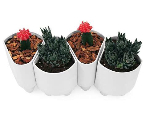 vaso da interno vasi da interno vasi da giardino vasi per ambienti interni