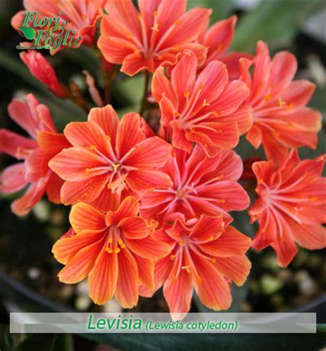 fiori in generale come si chiama diamo un nome a fiori e piante 1 fiori