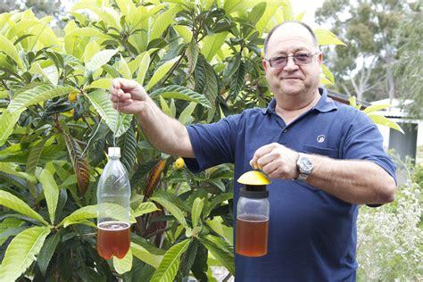Fruit Flies In Bedroom by How To Kill Fruit Flies Myideasbedroom