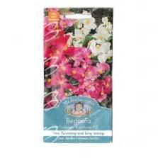 Benih Bibit Biji Bunga Begonia Summer Rainbow F2 Seeds Import benih bunga rosella ungu