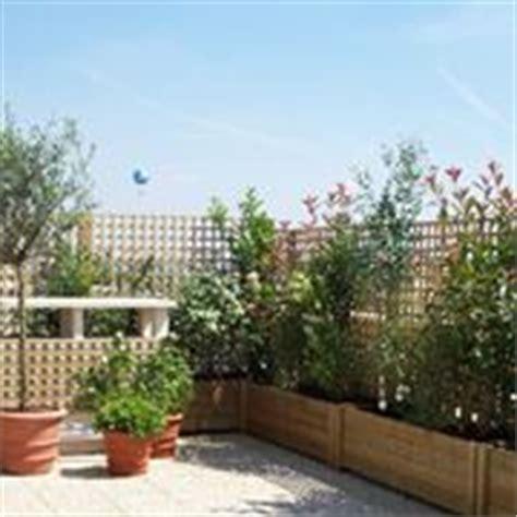 terrazze arredate con piante piante per terrazze piante da terrazzo piante per terrazzo
