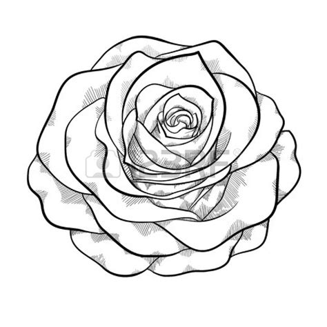 simple rose tattoo outline image gallery rose outline