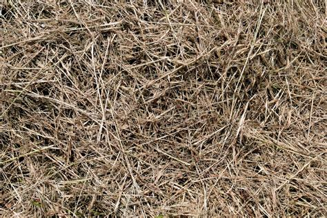 pattern nature ground free picture dry texture pattern nature straw herb