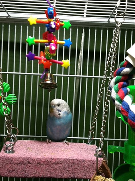 budgie swing budgie cages how to set up your parakeet s cage with toys