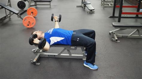flat bench db fly flat bench dumbbell fly exercise technique definition