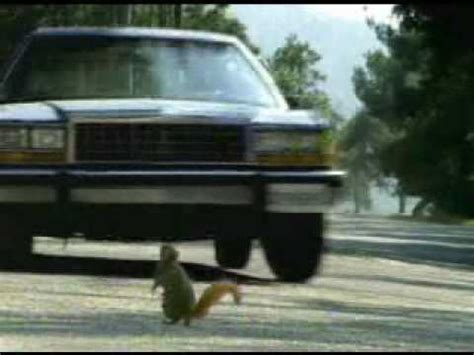 squirrel commercial geico fgklbruga geico squirrels commercial youtube