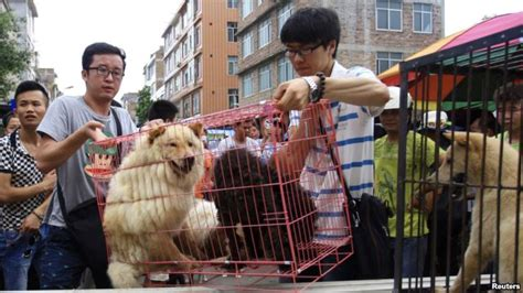 what to use on dogs skin rights groups criticize use of skin in china breaking news