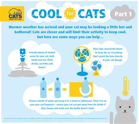 how to cool your how to keep your cat cool in the summer meow cats protection