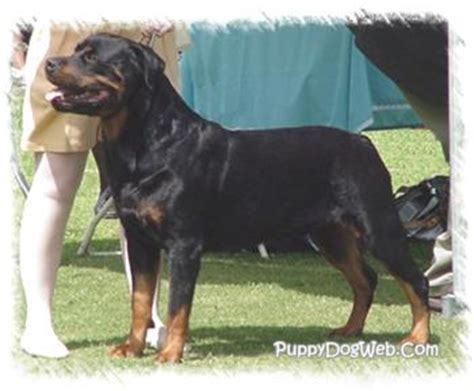 rottweiler height and weight database error