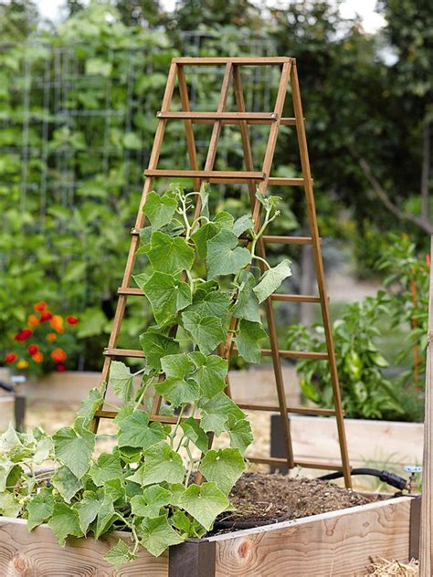 garden structures for climbing plants a frame structures in the vegetable garden corner