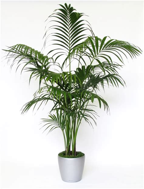 indoor palm 20 indoor house plants that simply adore shade