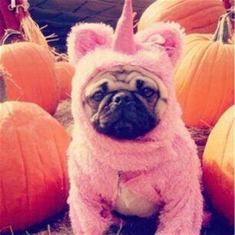 unicorn pug burly bakers on quot baby unicorn pug http t co zuer7tw6ca quot