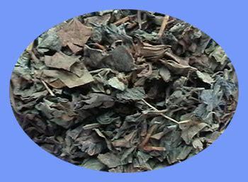 Yu Xing Cao Ekstrak Heartleaf Houttuynia Herb Herba Houttuyniae introduction to houttuynia yu xing cao
