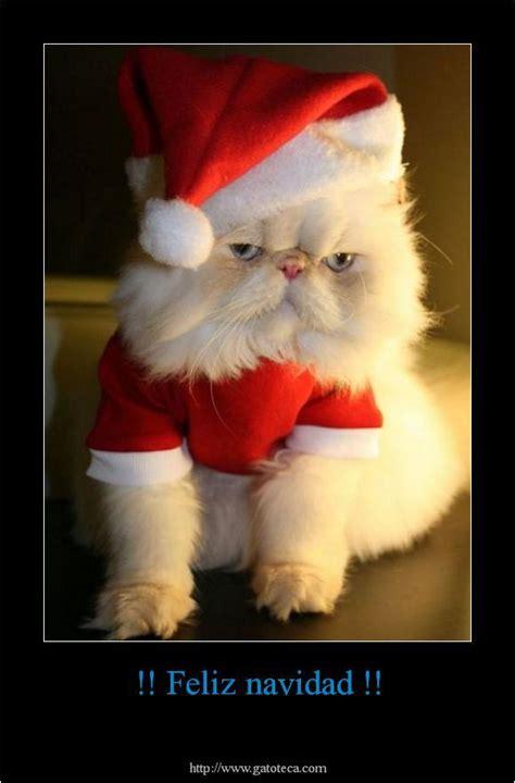 imagenes de memes bonitos imagenes de perros y gatos tiernos animales tiernos