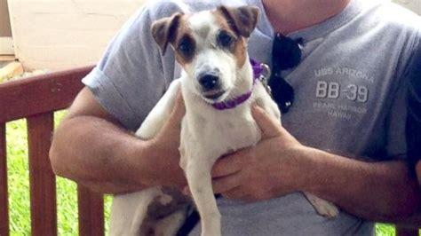 craigslist inland empire puppies adopts shelter posts it on craigslist an hour