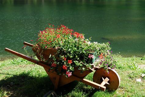 paesaggi di fiori carriola di fiori concorso fotografico i paesaggi cibo