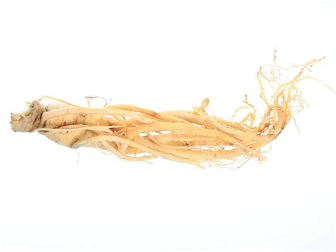 Ginseng China ginseng white root panax ginseng root extract
