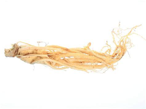 Ginseng Cina ginseng white root panax ginseng root extract bio botanica