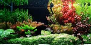 understanding aquascaping style the aquarium guide