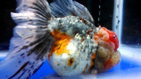 """aquascape indonesia – Aquarium """"THE LAST GREEN MILE""""   AquArtistic"""