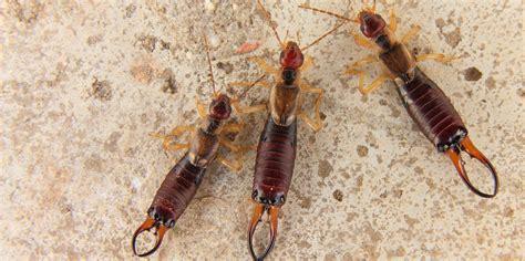 termite orkin pest termite control