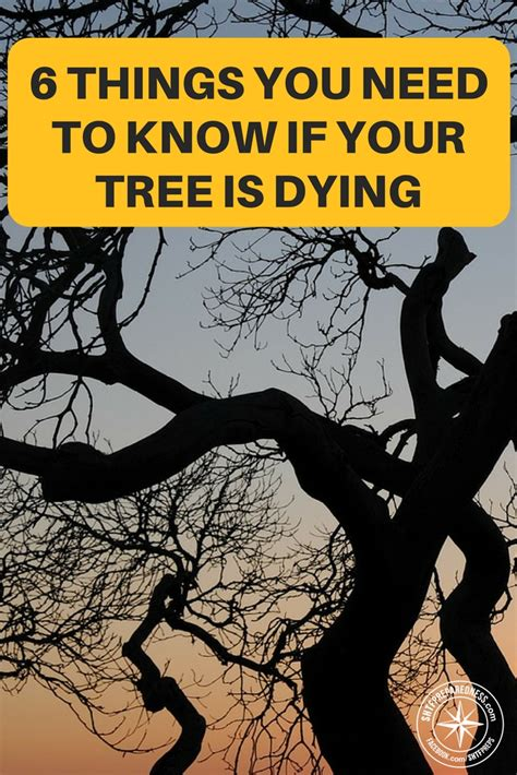 how to when your is dying what to do when your tree is dying 6 things you need to