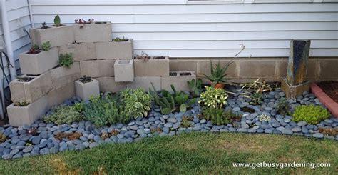 plants for backyard succulent zen garden