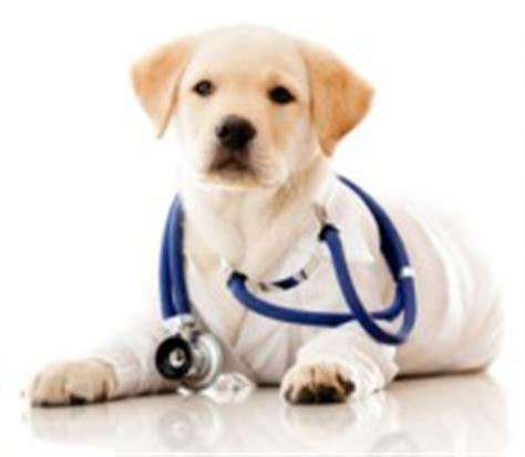 golden retriever depression symptoms lyme borreliosis in dogs lymenow
