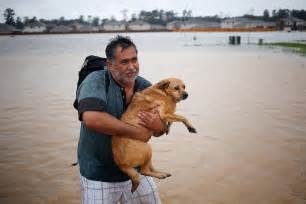 hurricane harvey dogs hurricane harvey pet stories rescues reunions animal refugees