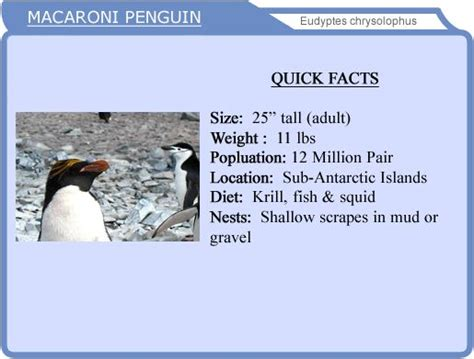 penguin facts for exciting facts about penguins facts about animals volume 18 books the world s catalog of ideas