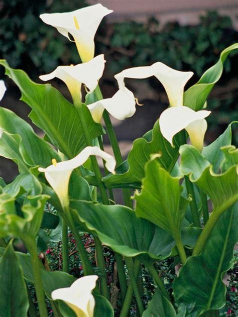 Die Sch Nsten Balkonpflanzen 3395 by Garten Blumen Gestaltung
