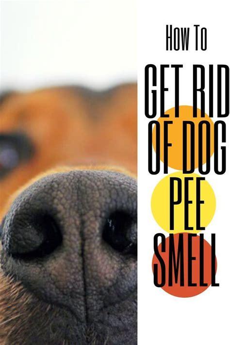 dog urine odor eliminator dog problems dogs dog