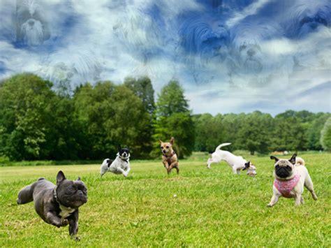 park for dogs glencarlyn park is a pet s paradise shull teamkeri shull team