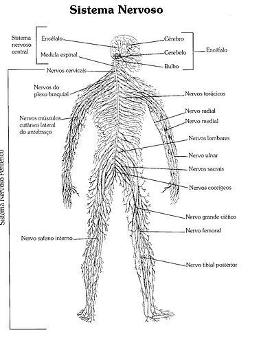 Atlas do corpo humano Oi... Estou postando o atlas do