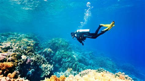 dive places 5 best places to go scuba diving in india india