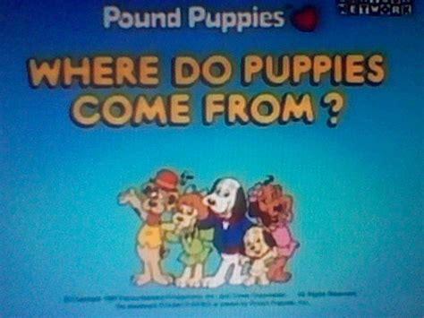 where do puppies come from episode 17 where do puppies come from pups on the pound puppies 1986 wiki