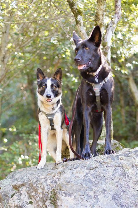 hiking dogs how to hike with your tips and great gear mnn nature network