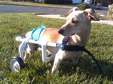 wheelchairs for dogs jerry west builds wheelchairs for dogs in need heroes among us deeds real