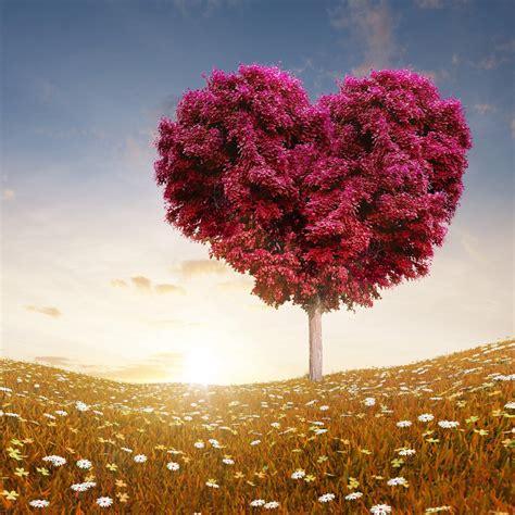 tree  love hd wallpaper  ipad air