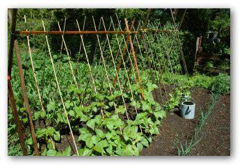 horse manure compost   home garden