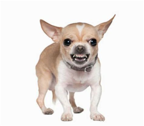 scary dogs image gallery scary dogs