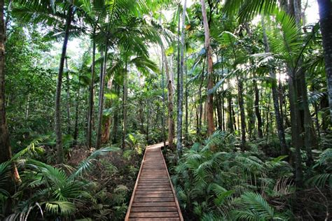Cairns Botanical Garden Cairns Botanic Gardens Cairns Information About Cairns